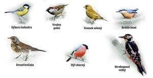 ptacci-vzdr